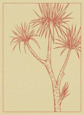 Cabbage Tree Postcard