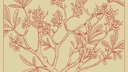 Origins Illustrations