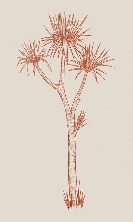 cabbage_tree.jpg