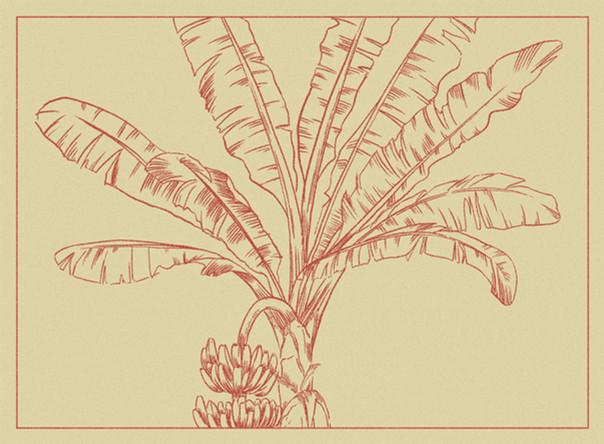 Banana Tree Postcard