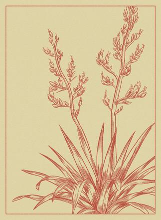 Flax Postcard