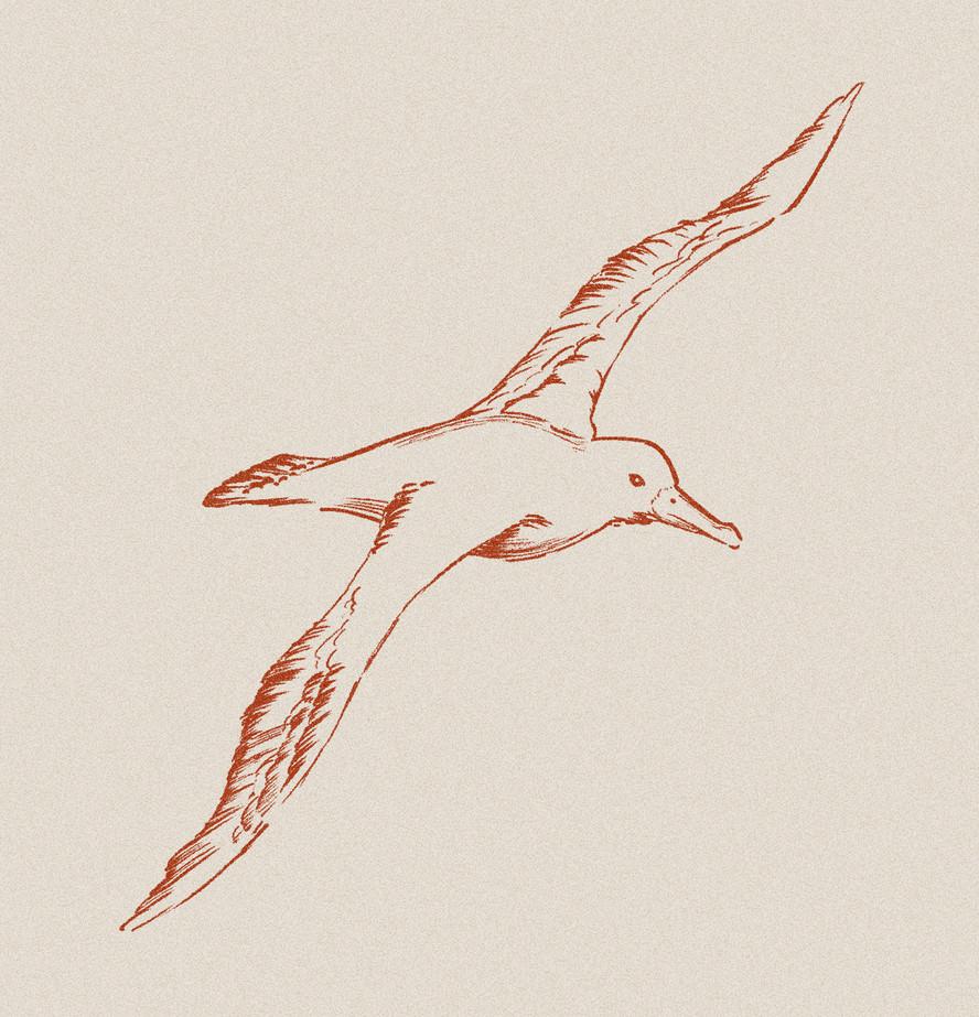 seabird_1.jpg