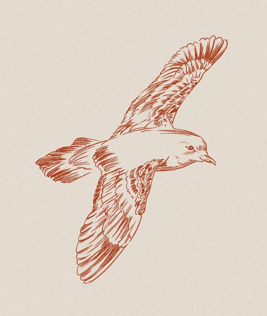 seabird_2.jpg