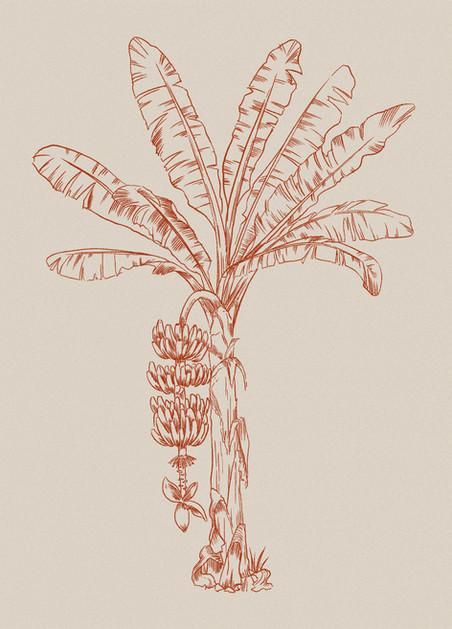 banana_tree.jpg