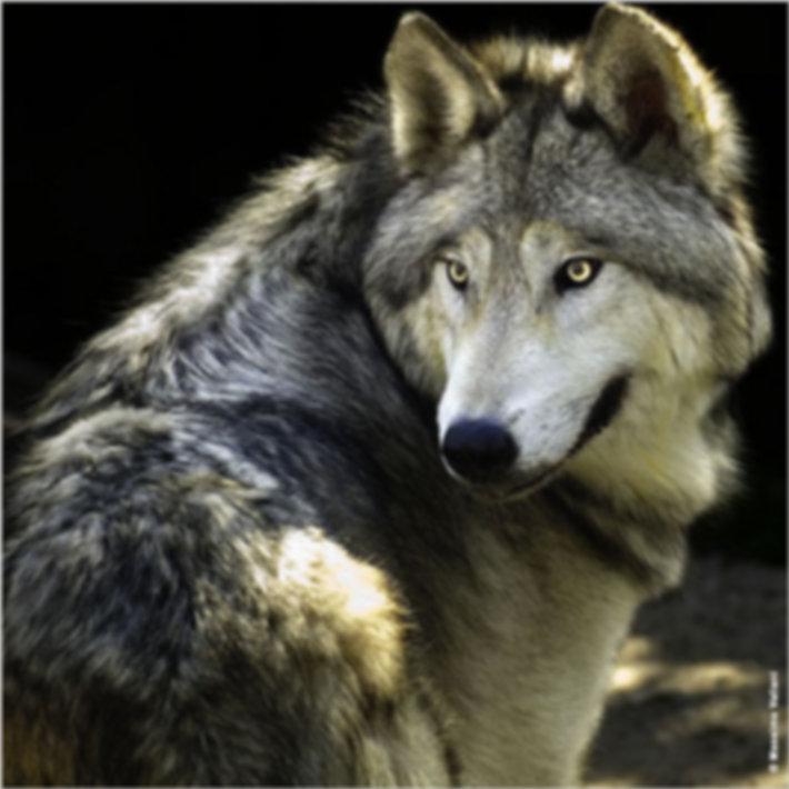 New Orleans Werewolf.jpg