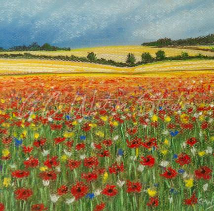 A Wild Flower Meadow