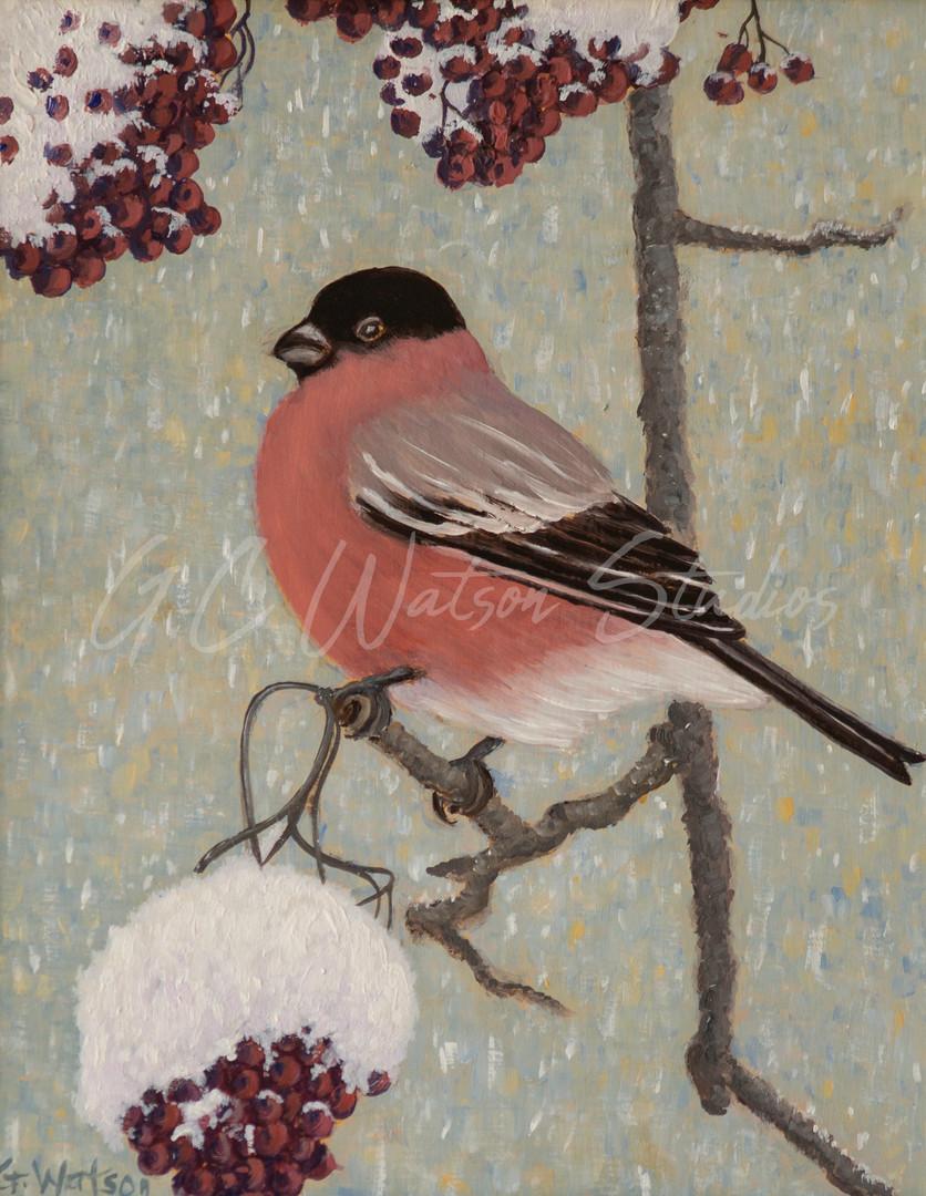 Bullfinch and Winter Berries