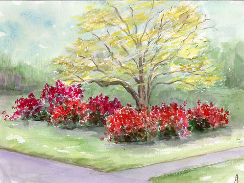 Azaleas and Dogwood