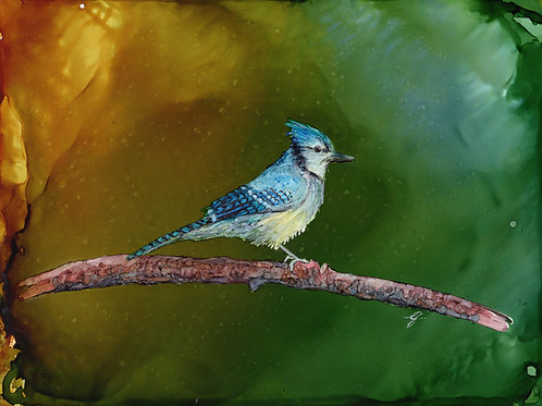 """Bluejay""  Original Painting"