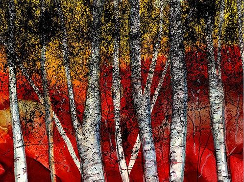 Autumn Birch Print