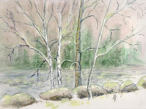 """Birch Trees""  Original Painting"