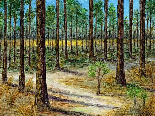 Longleaf Pine Print