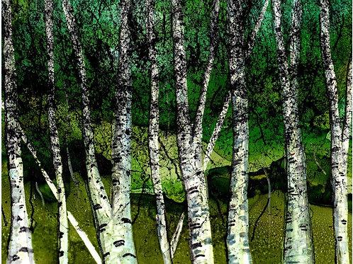 Summer Birch Print