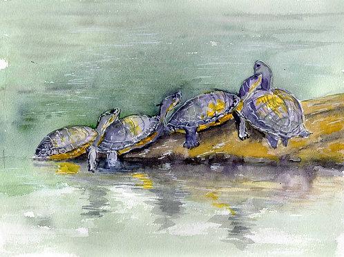 """""""Turles""""  Original Painting"""