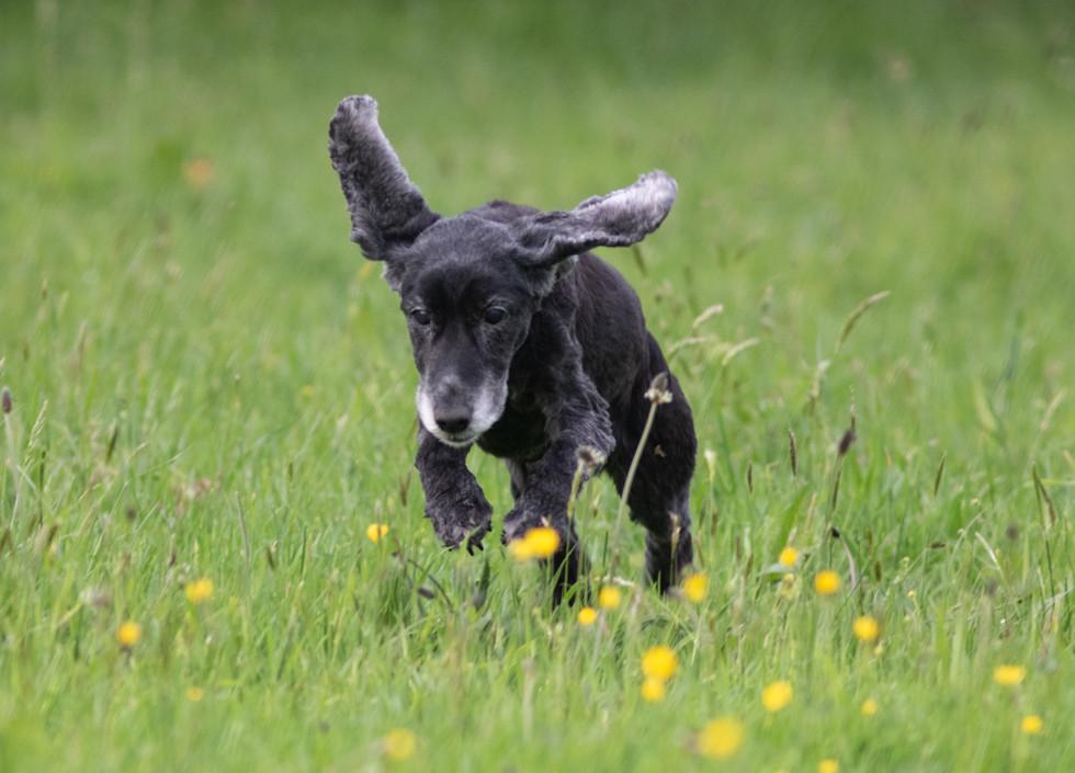 COLOUR - Doggy Run by Bernie Gervin (8 marks)