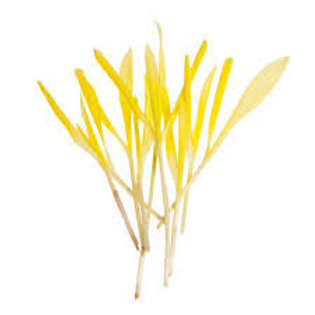 Pop corn shoots