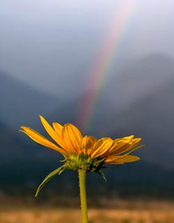 RainbowSunflower Way of Passage