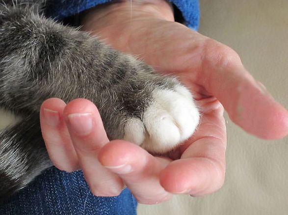 free_paw_in_hand_no_bandaid.jpg