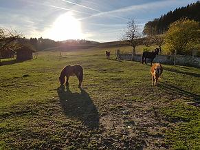 activités avec les poneys