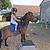 Journée avec les poneys de 6 à 12 ans