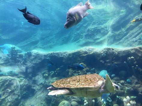 SeaWorld Orlando, del 2: shower & djurpark
