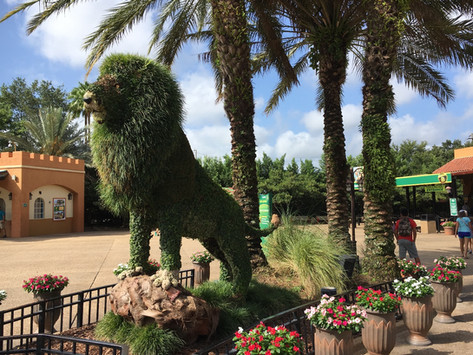 Fartfylld dag på Busch Gardens i Tampa, Florida