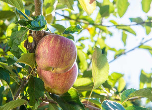 Time to spray for best fruit this summer.