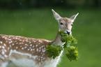 Ah...those pesky deer