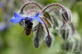 7 Ways to Attract Pollinators