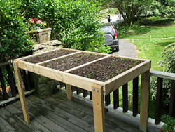 Simple Plant Stand for Growing Salad Greens