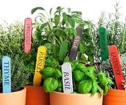 Herbs for Cooking and Fragrance