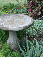 Add A Water Feature to Attract Wildlife