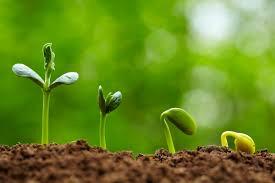 Seed Starting Timeline