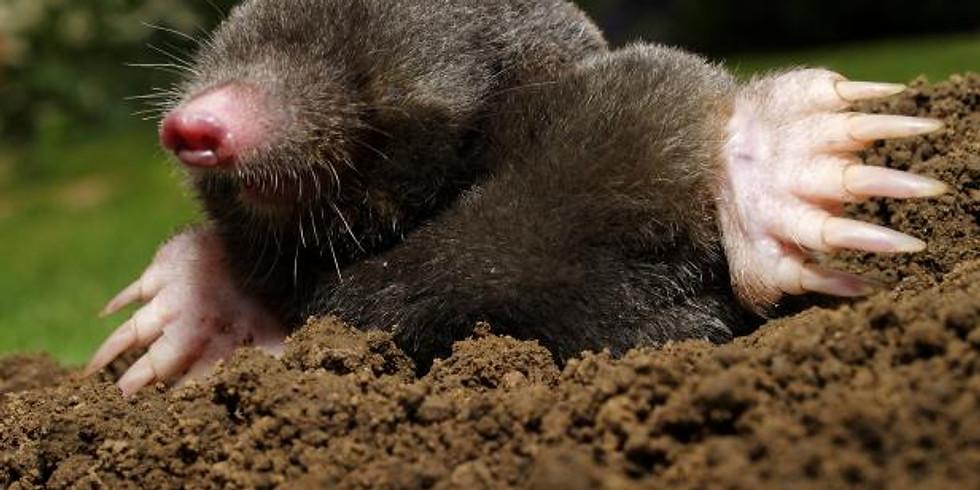 Voles and Moles