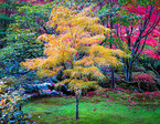 Fall is a great time to plant small garden trees.