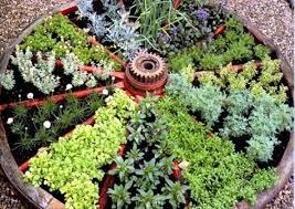 Oh Those Wonderful Herbs
