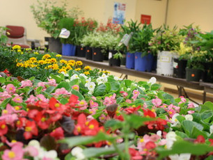 Save the Date:  May 22 Plant Sale