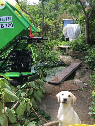 Shrewsbury Pruning Job