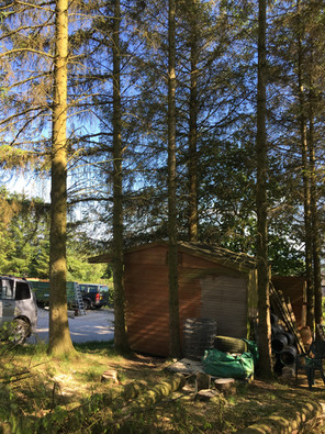 Large Conifer Site Clearance