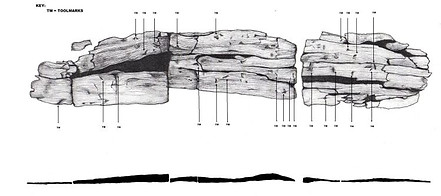 Wooden plank from a Fulacht Fiadh