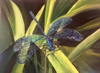 Dragonfly.jpeg