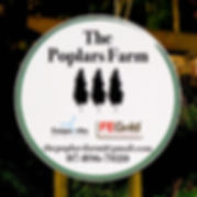 The Poplars Farm, Coopworths, FE Gold, Kirikau Coopworths