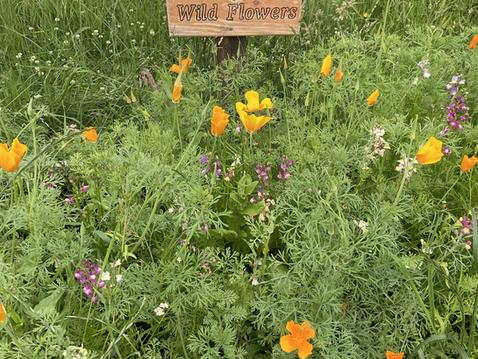 """""""Rewilding"""" in our Biodiversity Garden"""