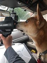 dog in patrol car.jpg