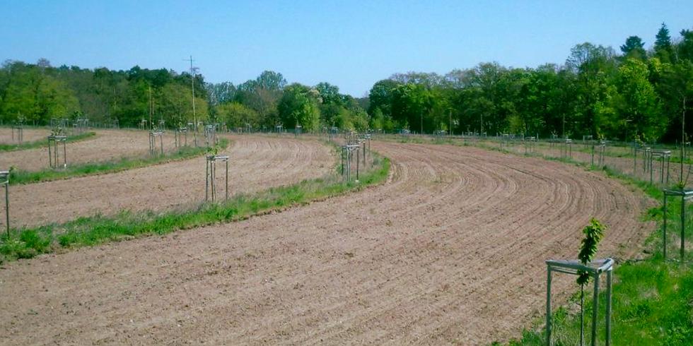 Grundkurs Keyline Design – Wasser für die Landwirtschaft