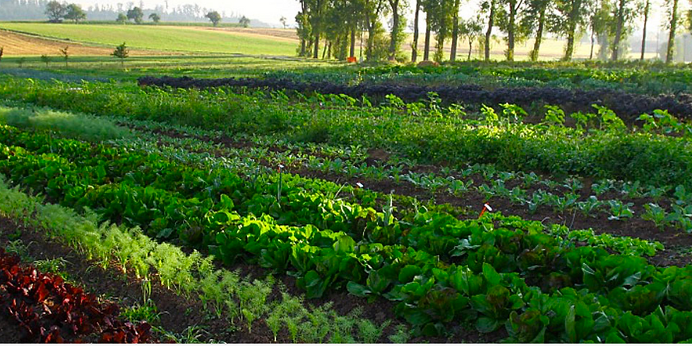Market Garden System - nachhaltig & regenerativ
