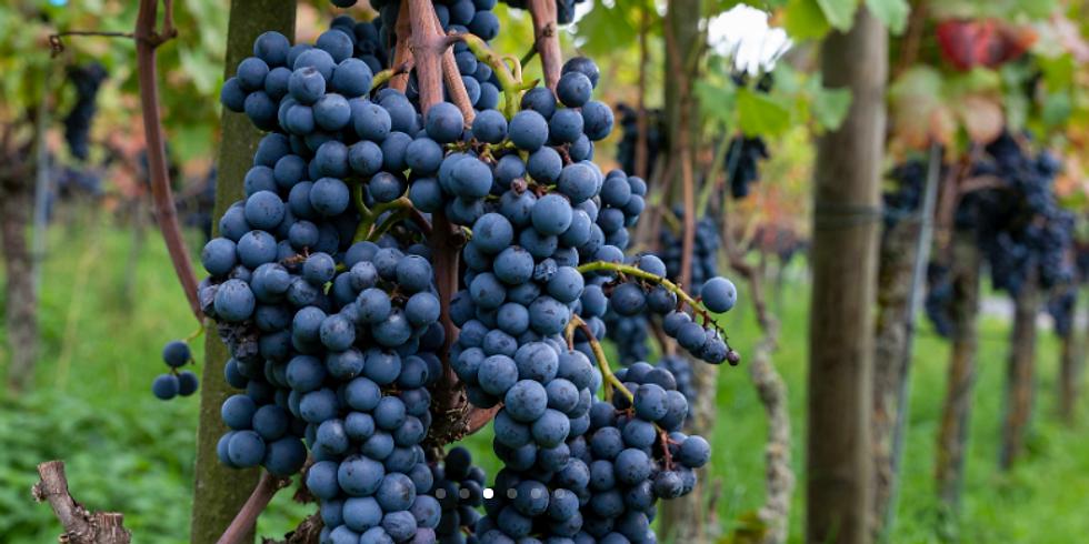 Kurs regenerativer Weinbau