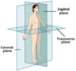The-Anatomical-Planes-of-the-Human-Body-