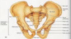 human-body-parts-pelvic-bone-pelvis.jpg