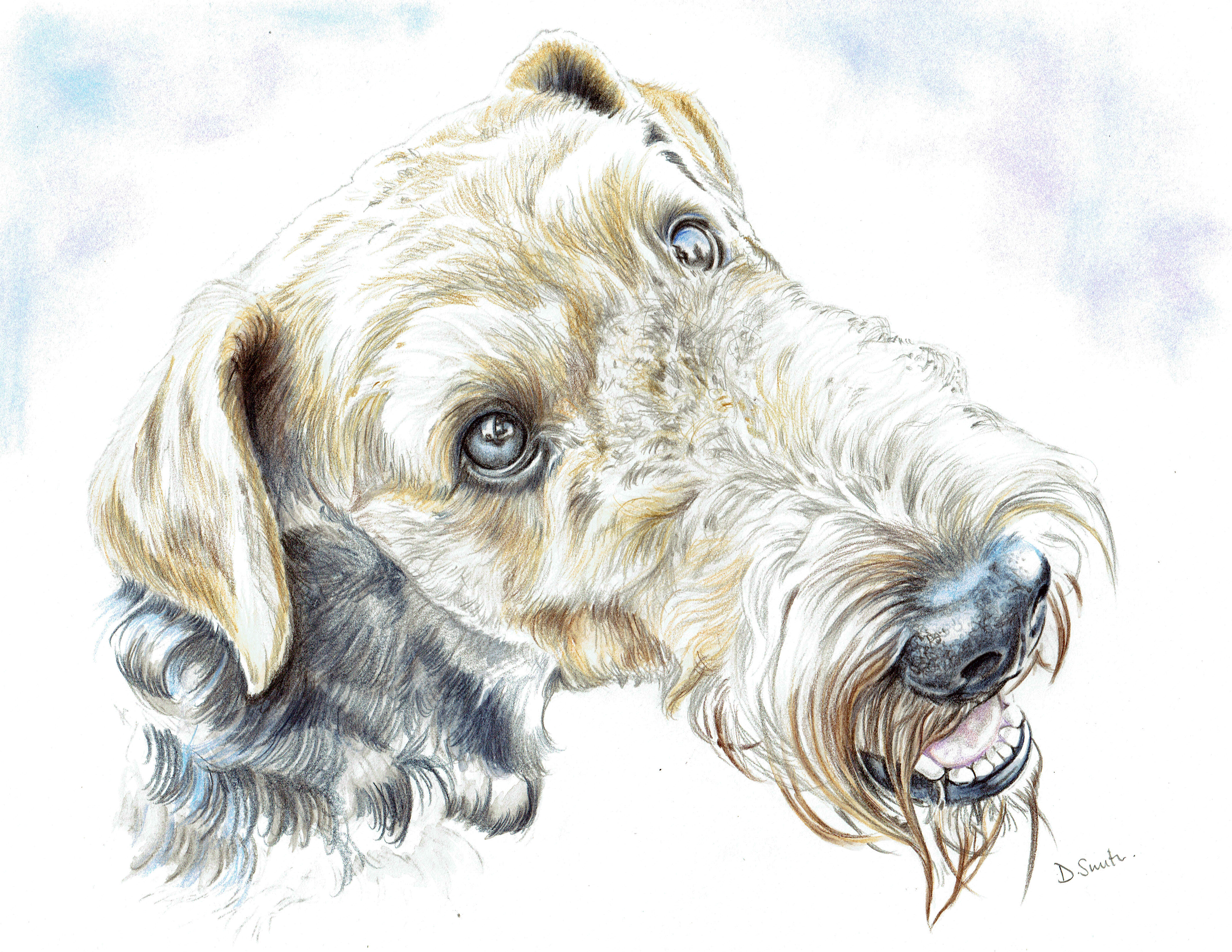 dave airedale 1